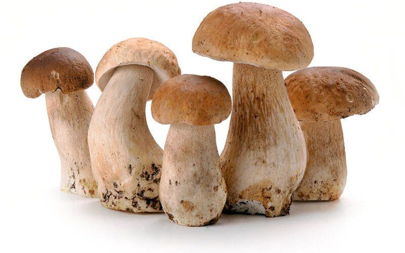 Фото Как варить белые грибы